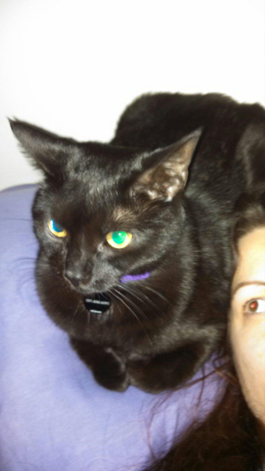 Human Uses Cat As Pillow