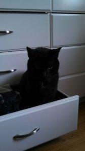 Drawer Kitty
